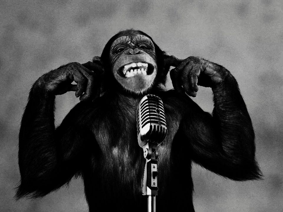 monkey_wallpaper