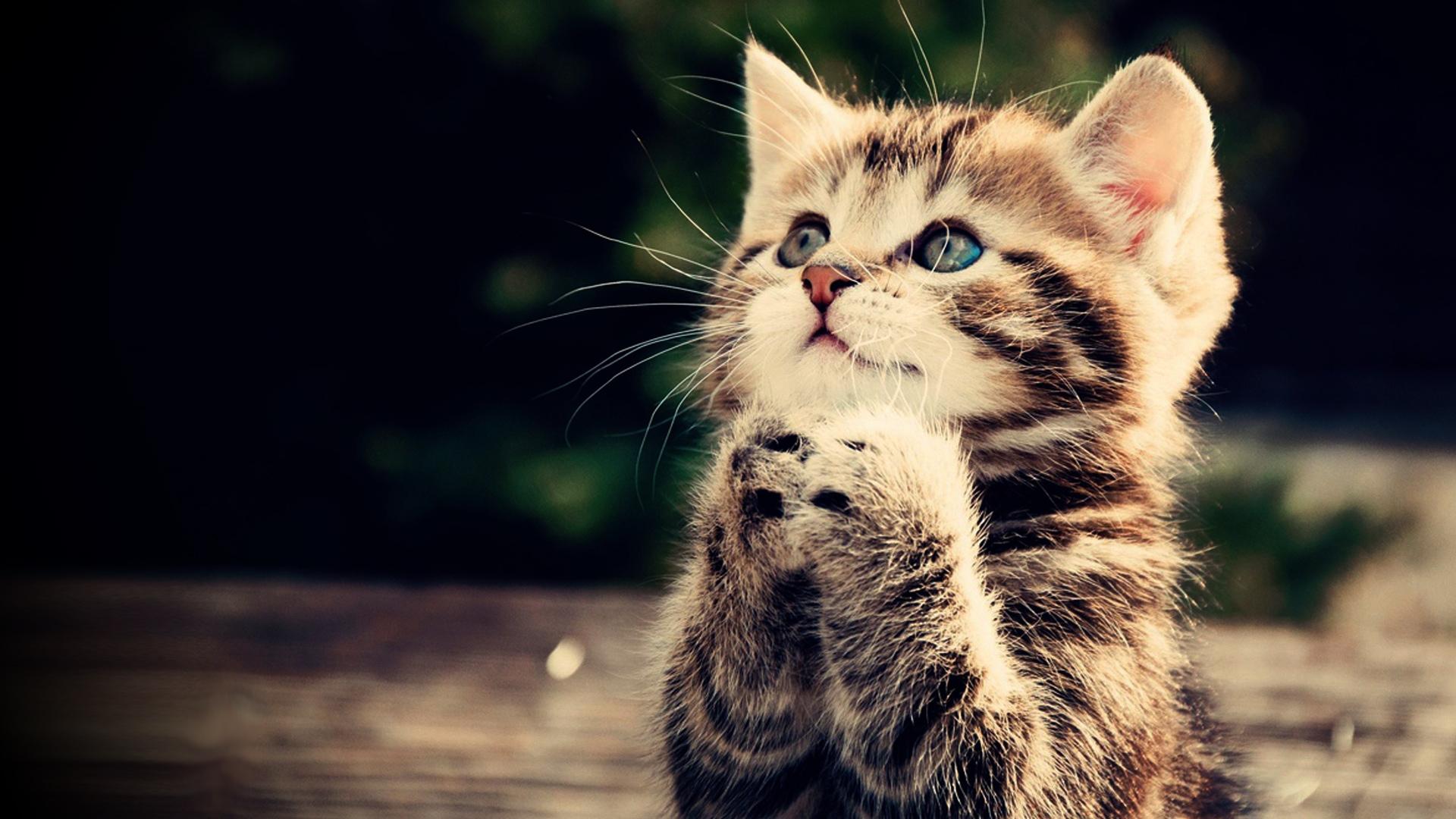 hopingcat